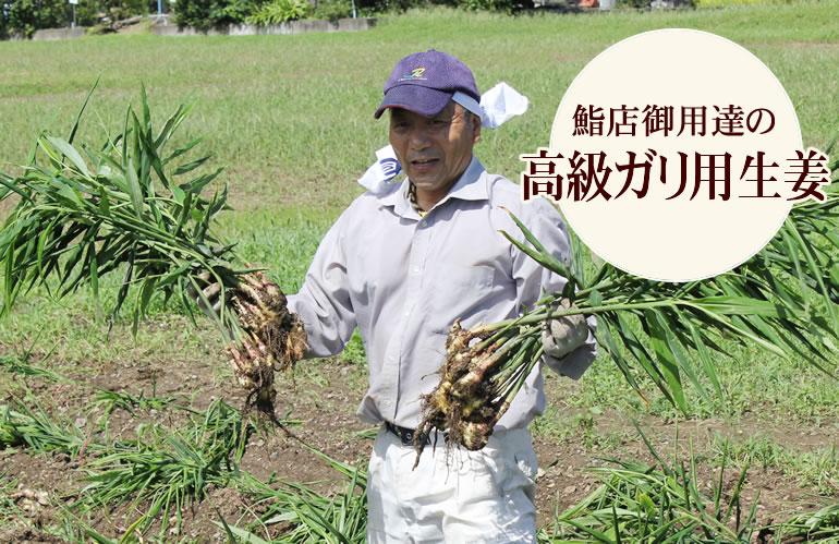 1万円のガリ生姜